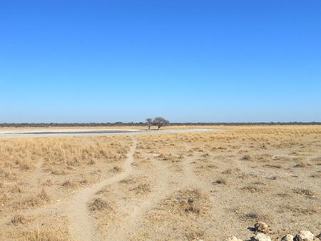Helter Skelter: Botswana