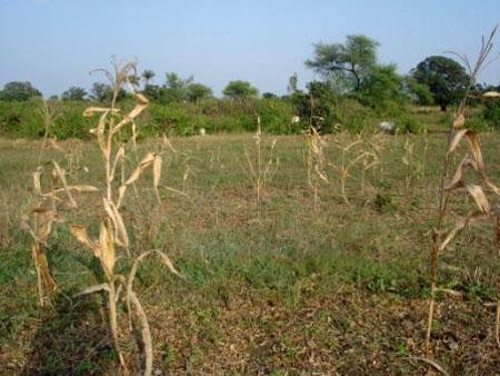 Helter Skelter: Pratapgarh