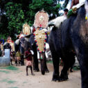 Decorated elephants